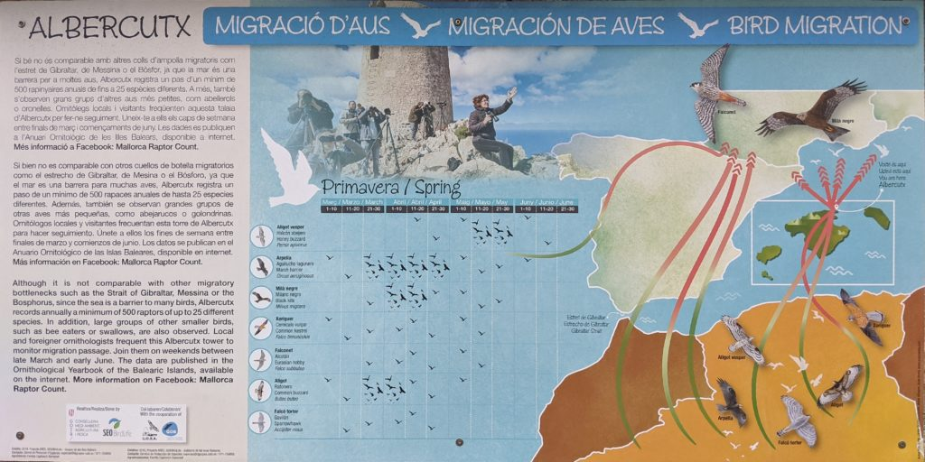 Cartel Migración de Aves Rapaces en Mallorca