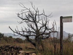 Inició de la ruta Sa Barcasa en albufereta