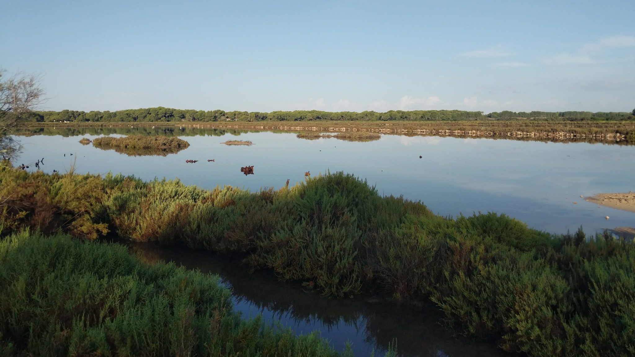 Laguna del Salobrar de Campos